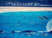 Baleia golpeia surfista em Bondi Beach, Sydney, Austrália. Foto: Reprodução.